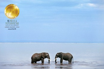 Two bull elephants face each other in a stand off, Lake Manyara.